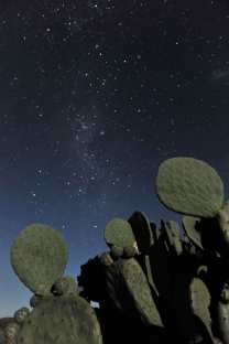 Moonlit Cactus, Sutherland  during a visit to SAAO, by Hillary Sanctuary (c).